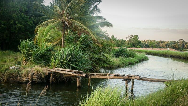 Beautiful scenery of wooden bridge over water stream at polonnaruwa srilanka. Beautiful scenery of wooden bridge  water stream at polonnaruwa srilanka. rural stock image