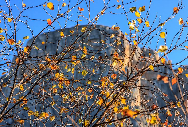 Beautiful scenic autumn view at Caucasus rocky mountains. Mountain rock viewed through yellow leaves on blue sky background on sun royalty free stock photography