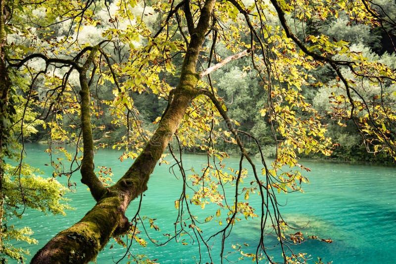 Beautiful scenic landscape view on river soca in slovenia. Beautiful scenic landscape view on river soca stock photos