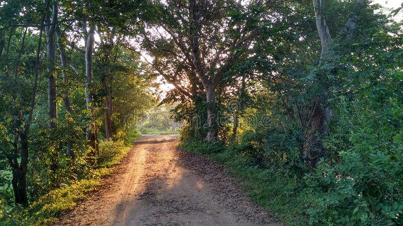 A beautiful scenic view of a rural village earthen road and the sunrays coming from the foliage of trees surrounded by. royalty free stock photos