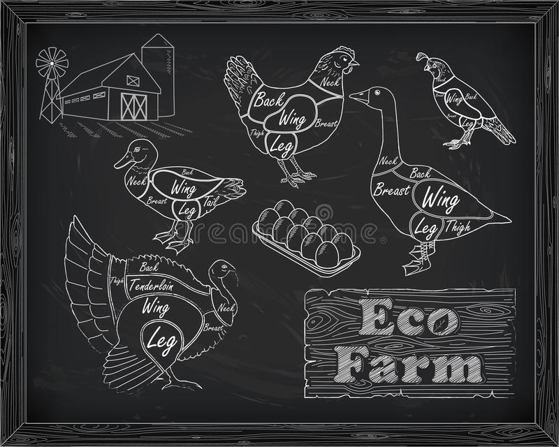 Beautiful scheme cutting chicken turkey duck goose quail on the vector illustration