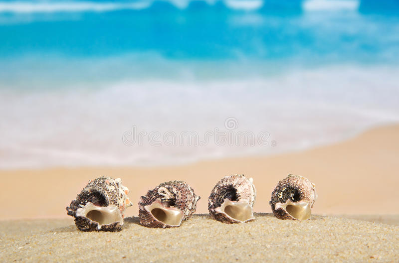 Beautiful sea cockleshells. On the sandy coast stock images