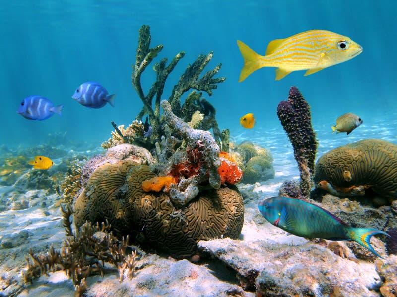 Ocean Animal Encyclopedia | Oceana |Ocean Life Plant Caribbean
