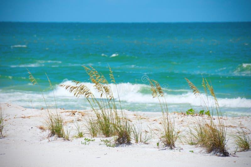 Beautiful sea oats along aqua colored ocean shoreline with waves royalty free stock photo