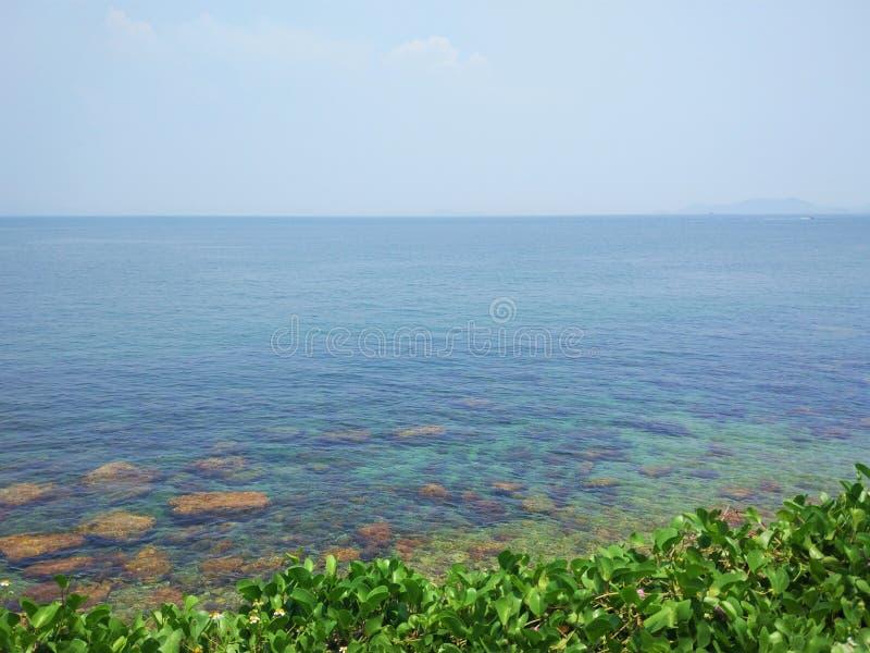Beautiful sea reef royalty free stock image