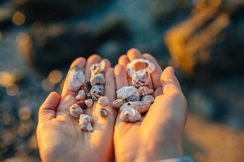 Sea shells in the hand. stock photography