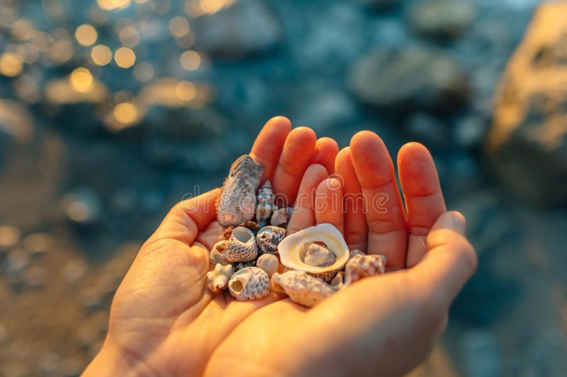 Sea shells in the hand. stock image