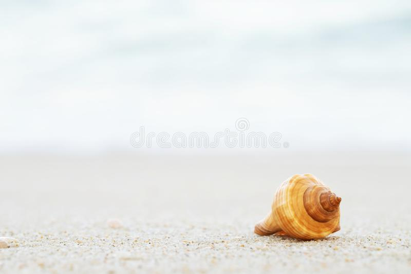 Beautiful sea shell on sand with wave of on the beach over seascape royalty free stock photo