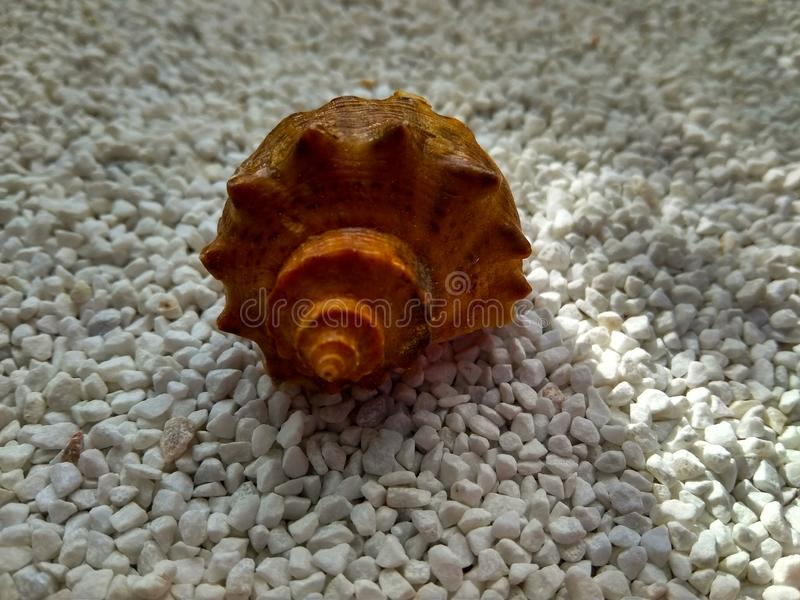 Beautiful sea shell on small white marble chips royalty free stock photo