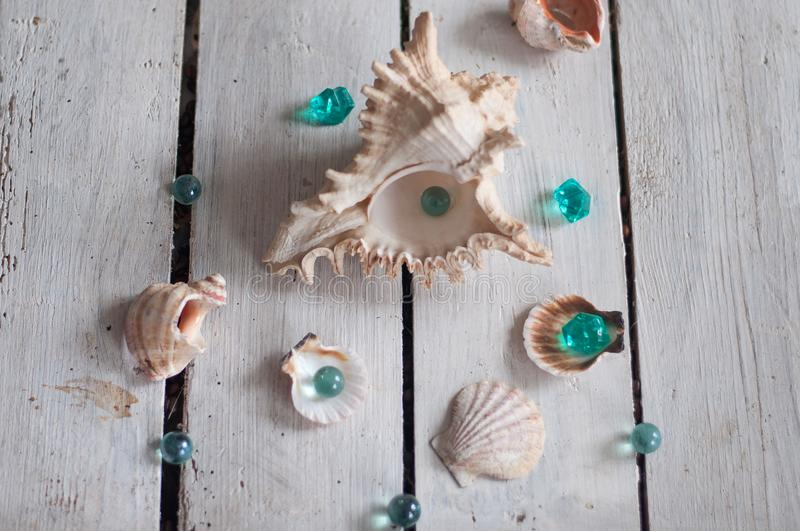 Shells, pearls, sea, background, white background, wooden background, sea shells royalty free stock photography