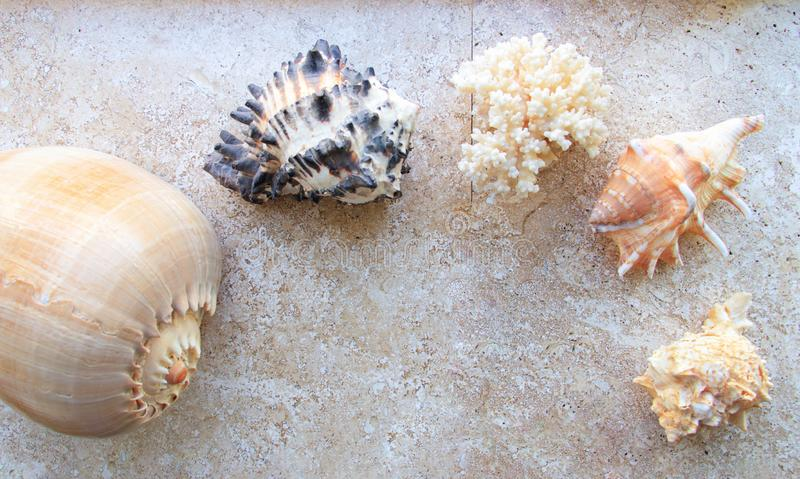 Beautiful sea shells and a sea star royalty free stock images