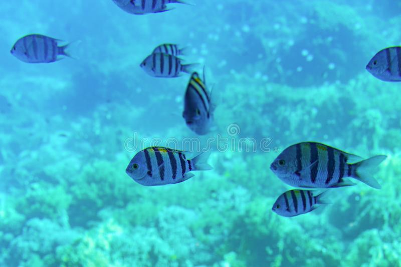 Beautiful seabed background, gorgeous sea bottom through transparent blue water, majestic marine life, travel and vacation concept.  stock photos