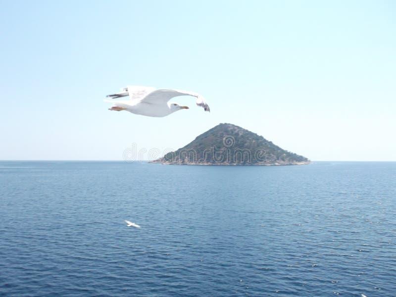 Beautiful seagull stock photo
