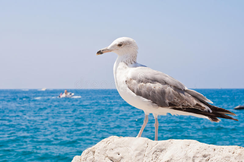 Download Beautiful Seagull Rests Alone On The Stone Stock Image - Image of natural, background: 28050335