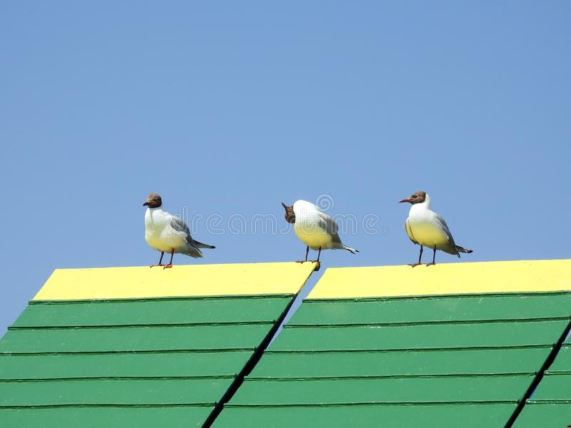 Beautiful seagulls on ship detail, Lithuania stock photos