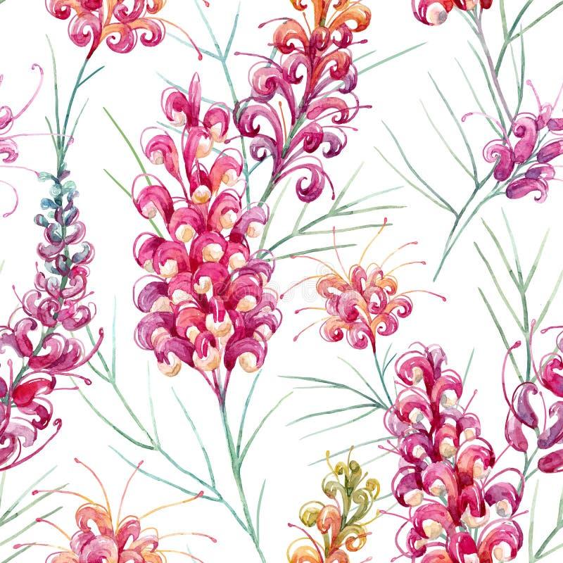 Watercolor australian grevillea pattern vector illustration