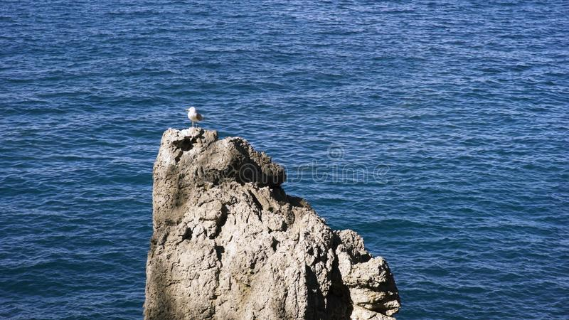 Beautiful seascape with a lonely seagull standing on a rock by the sea. Art. Small white bird standing on a stony royalty free stock image
