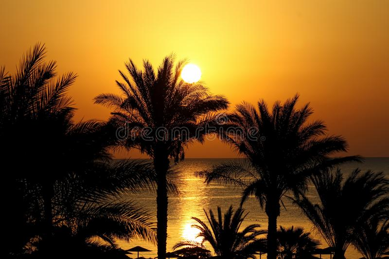 Beautiful seascape with morning sun, beach, and palm trees stock photography