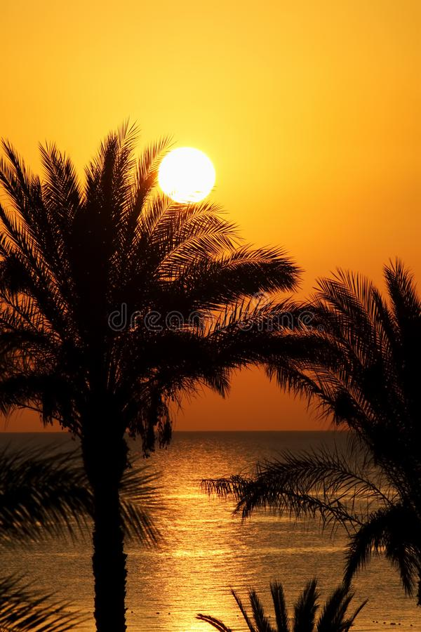 Beautiful seascape with morning sun and palm trees stock images