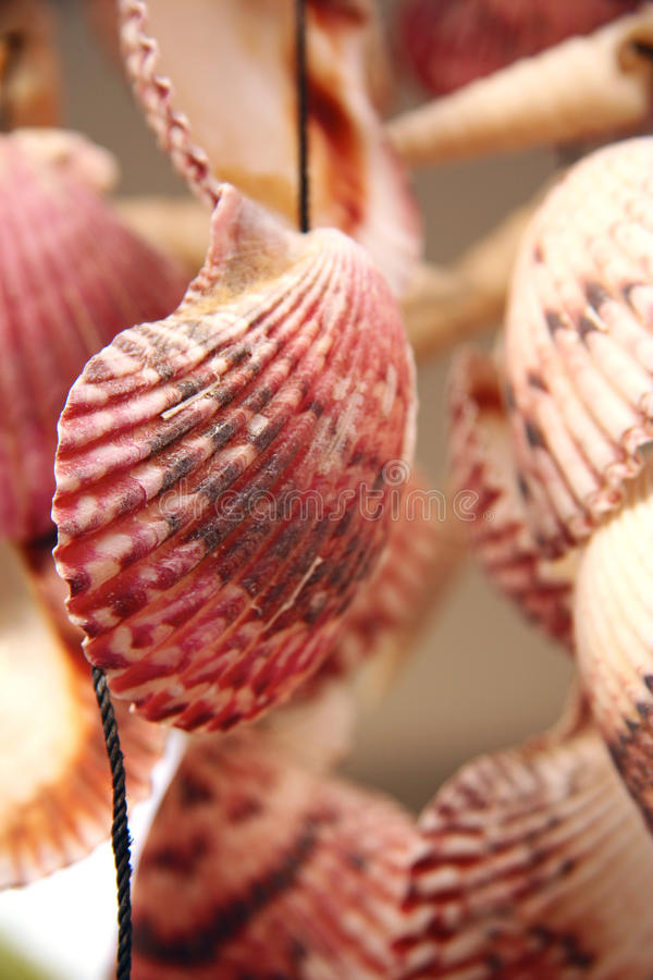Beautiful seashells hanging stock photos