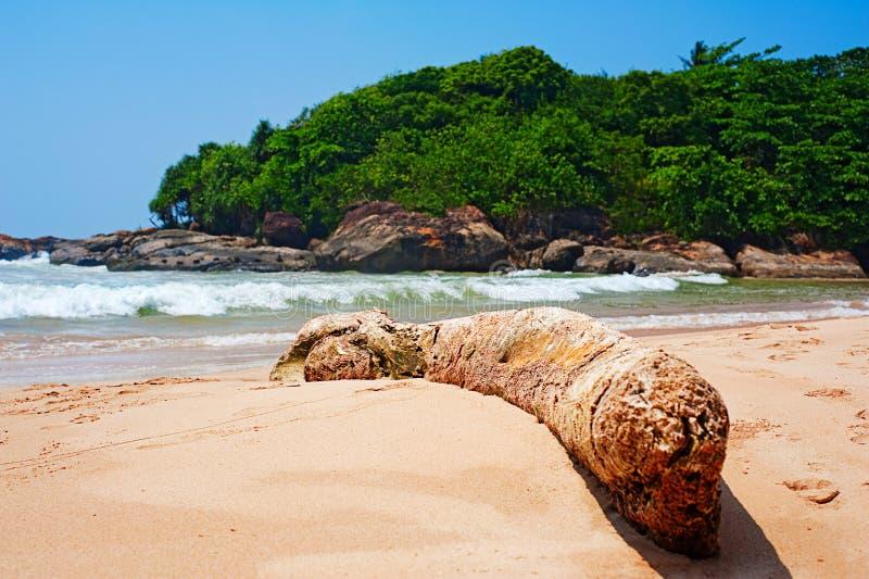 Download Beautiful seashore stock photo. Image of coastline, beach - 11676462