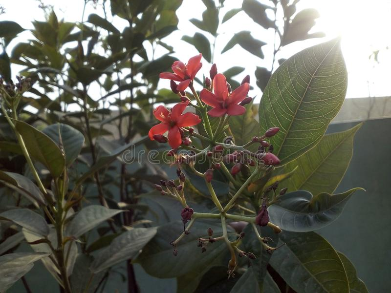 Red flowers & green leafs. royalty free stock photography