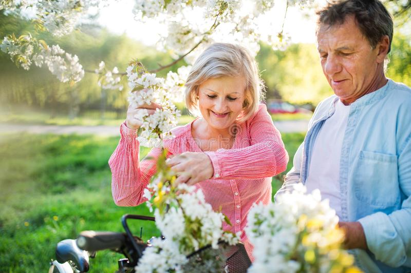 Beautiful senior couple with bicycles outside in spring nature. stock image