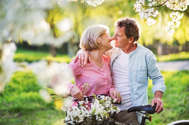 Beautiful senior couple with bicycles outside in spring nature. Beautiful senior couple with bicycles outside in spring nature under blossoming trees. Man and stock image