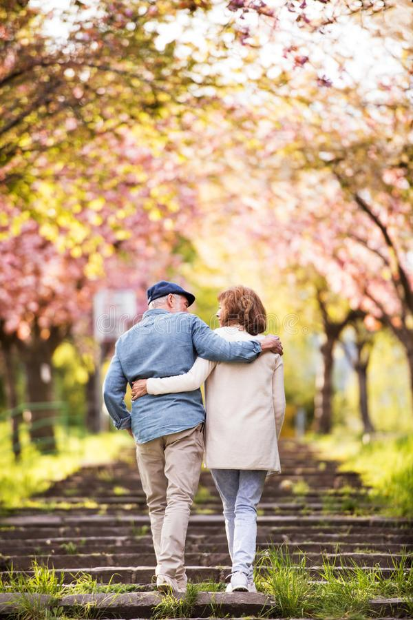 Beautiful senior couple in love outside in spring nature. Beautiful senior couple in love on a walk outside in spring nature under blossoming trees. Rear view royalty free stock images