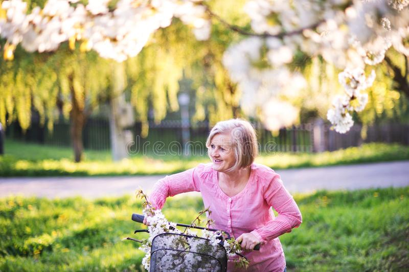 Beautiful senior woman with bicycle outside in spring nature. Beautiful senior woman with bicycle outside in spring nature, resting royalty free stock photo