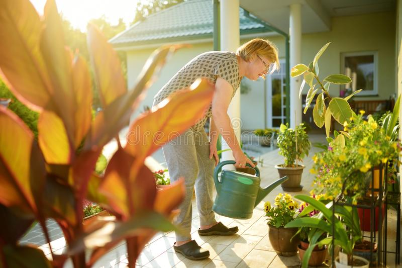 Beautiful senior woman watering blossoming plants on a terrace of her house stock image