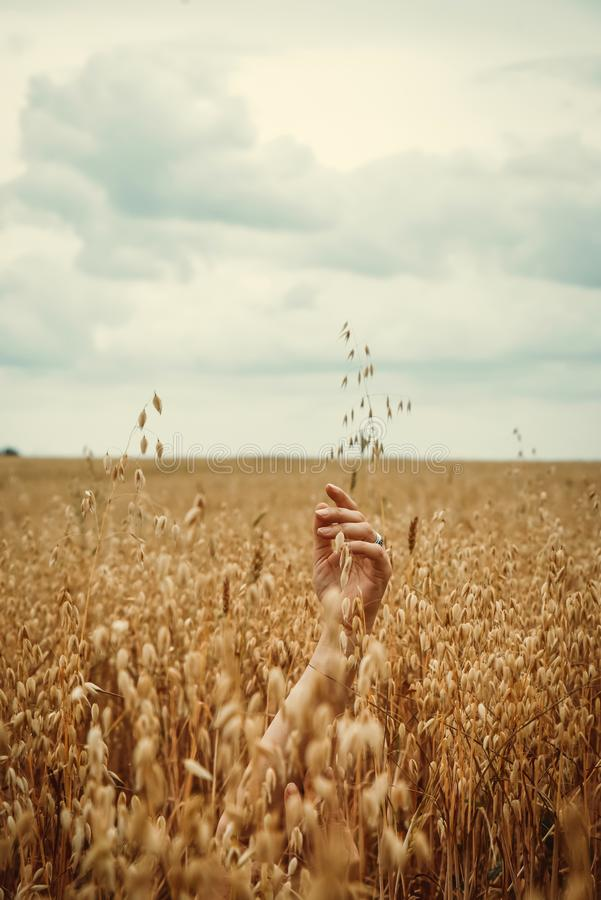 Beautiful, sensual female hands are visible in the field of ripened oats. Adult Woman Sexuality Concept. Beautiful, sensual, female hands are visible in the stock photo
