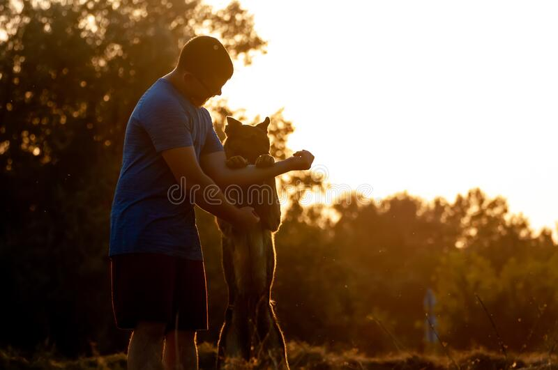 View on a man and german shepherd dog during a sunset. Beautiful sensual photo of a handsome man and a german shepherd dog while training and playing during the stock images
