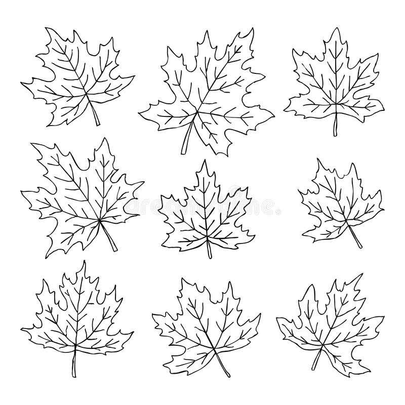 Beautiful Set Of Doodle Maple Leaves. Isolated Sketch. Design ...