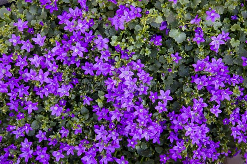 Beautiful set of flower buds stock photo
