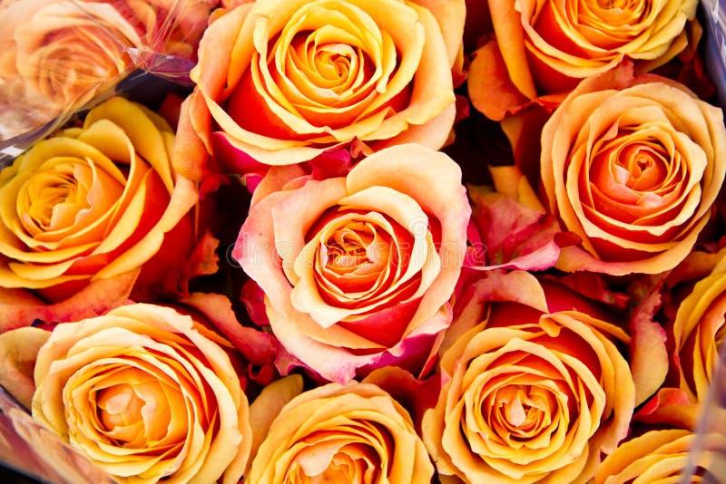 Beautiful set of flowers stock image
