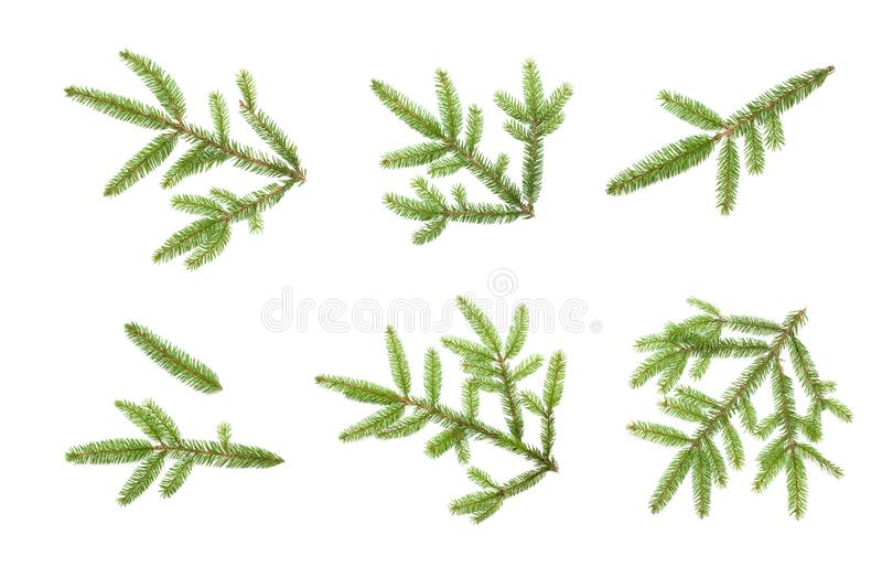 Beautiful Set of Nature fresh green fir tree branch close up. Christmas tree branches isolated on white background for design. Top royalty free stock photography