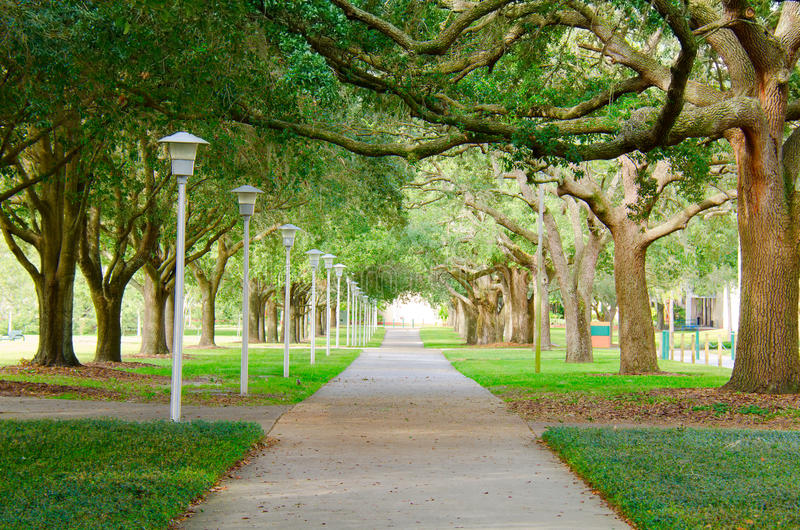 Download Beautiful Shaded Sidewalk With A Lush Green Tree Canopy Stock Image - Image: 34534375