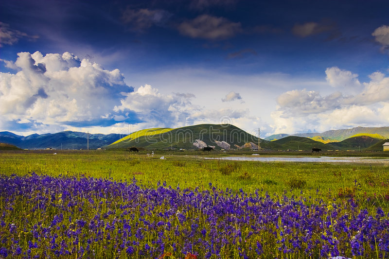 Beautiful shangri-la. This is a picture of the beautiful shangri-la royalty free stock photo