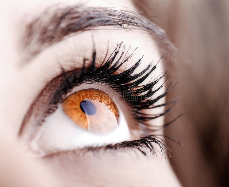 Beautiful shape of female eye stock images
