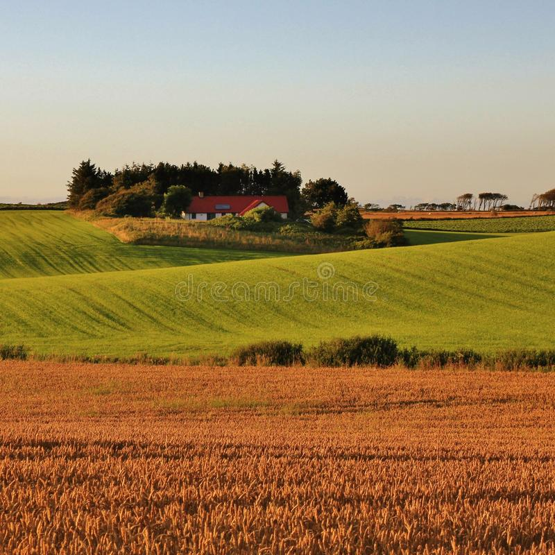 Beautiful shaped hills and meadows in Jylland, Denmark. Rural summer scene. stock photos