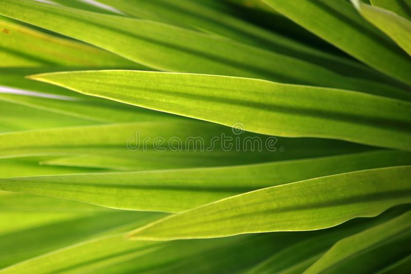 Download Beautiful sharp Leaf stock image. Image of garden, young - 17155359