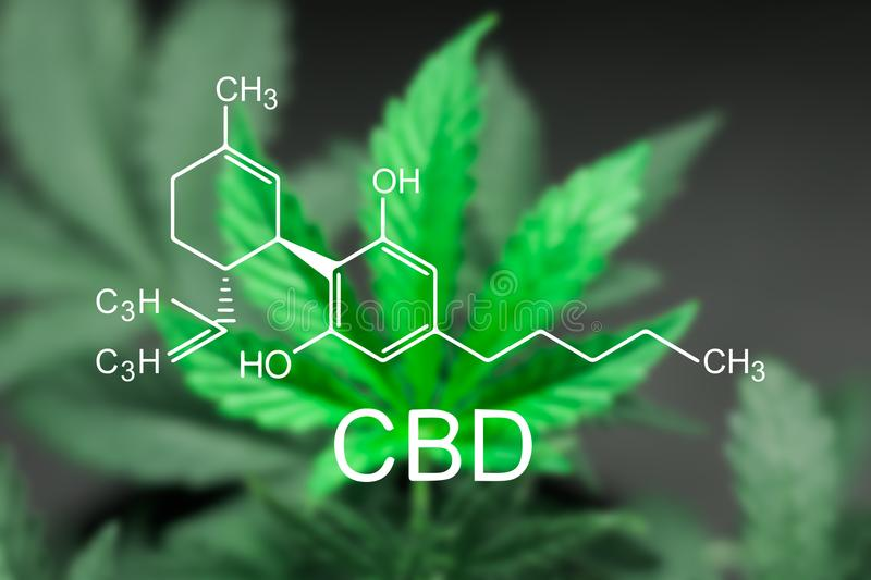 A beautiful sheet of cannabis marijuana in the defocus with the image of the formula CBD stock photography