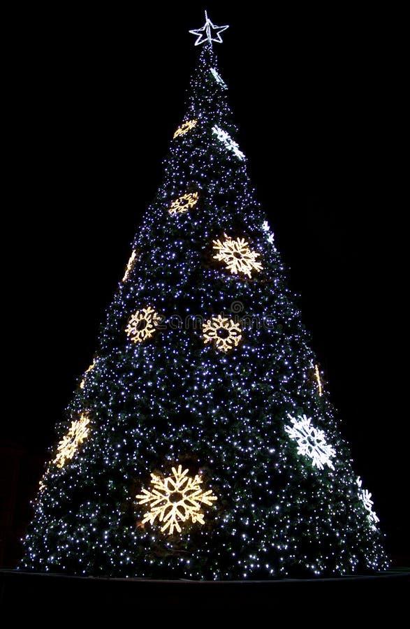 Download Beautiful Shining Christmas Trees Stock Image - Image: 28500923
