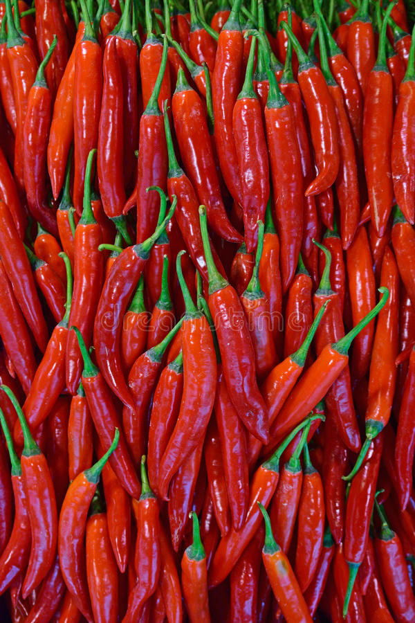 Beautiful shining red cayenne pepper stock images