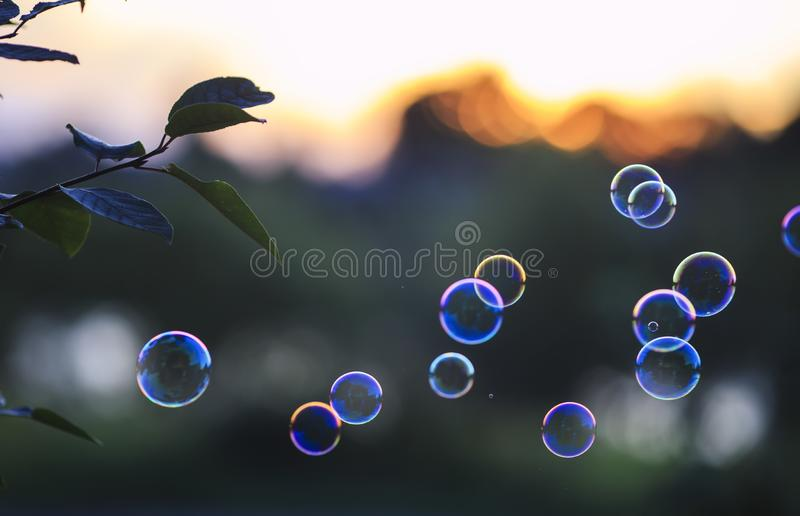 Beautiful shiny soap bubbles flying over sunset purple bright sky in summer Park. Shiny soap bubbles flying over sunset purple bright sky in summer Park stock images