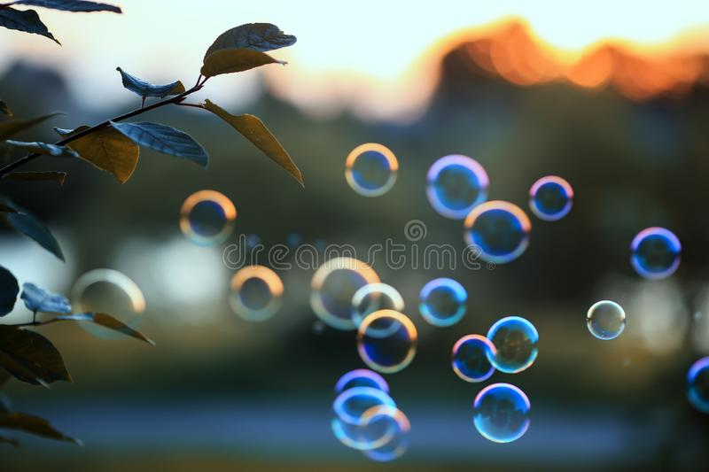 Beautiful shiny soap bubbles flying over sunset sky in a bright summer Park. Beautiful soap bubbles flying over sunset sky in a bright summer Park stock photo