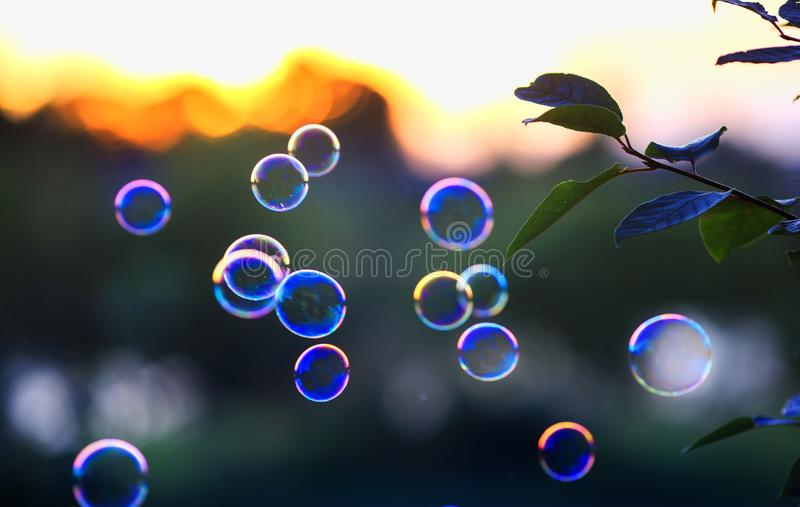 Beautiful shiny soap bubbles flying over sunset sky in a bright summer Park. Shiny soap bubbles flying over sunset sky in a bright summer Park stock image