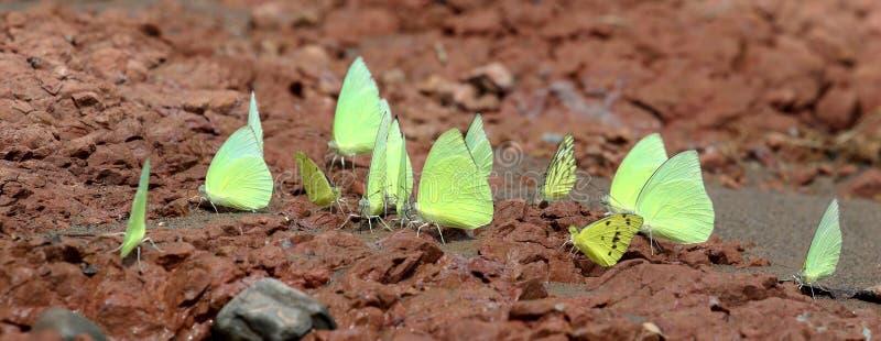 Butterflies. Beautiful shot of butterflies sitting at beach shore stock photo