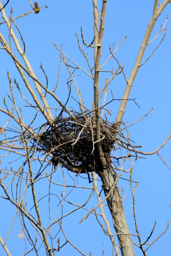 Crow nest royalty free stock images